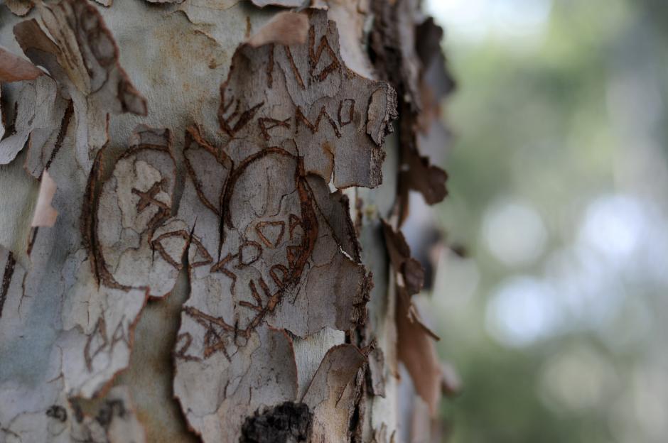 En la Plaza Berlín, zona 13, decenas de parejas plasman su amor en las cortezas de los árboles. (Esteban Biba/Soy502)
