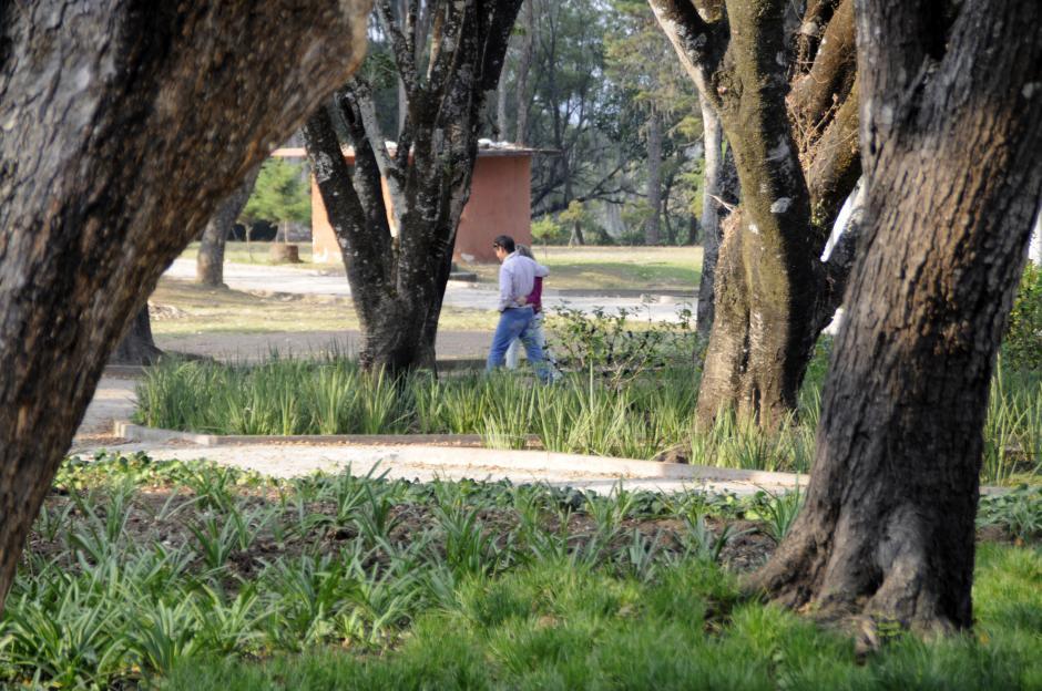 Los guatemaltecos y guatemaltecas gustan de caminar en los parques, en especial en el mes del amor y la amistad. (Esteban Biba/Soy502)