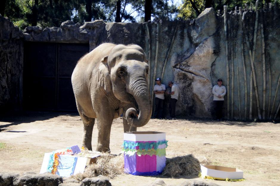 Antes de su pastel de cumpleaños, se le dio una piñata rellena de frutas. (Esteban Biba/Soy502)