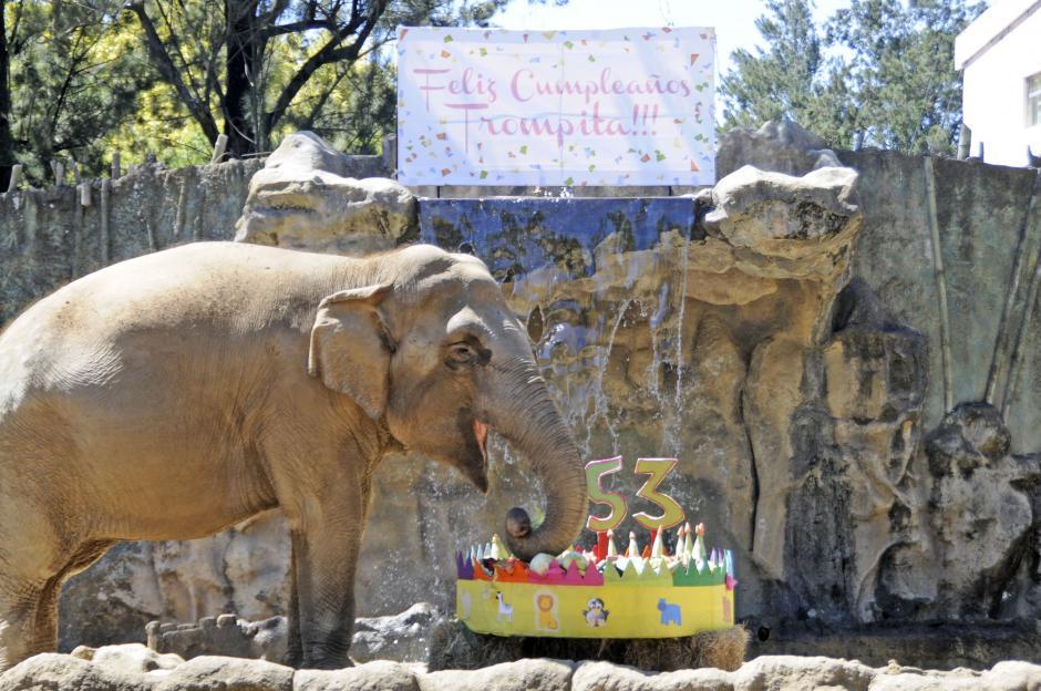 """Todo el domingo está dedicado en el Zoologíco La Aurora al cumpleaños de """"Trompita"""". (Esteban Biba/Soy502"""