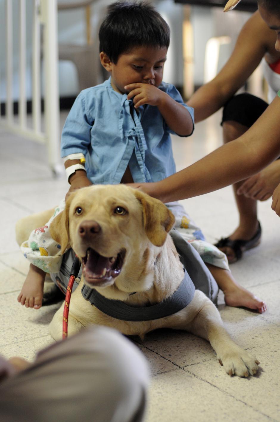 Las mascotas terapeutas se entrenan por ocho meses antes de realizar visitas a los hospitales. (Esteban Biba/Soy502)