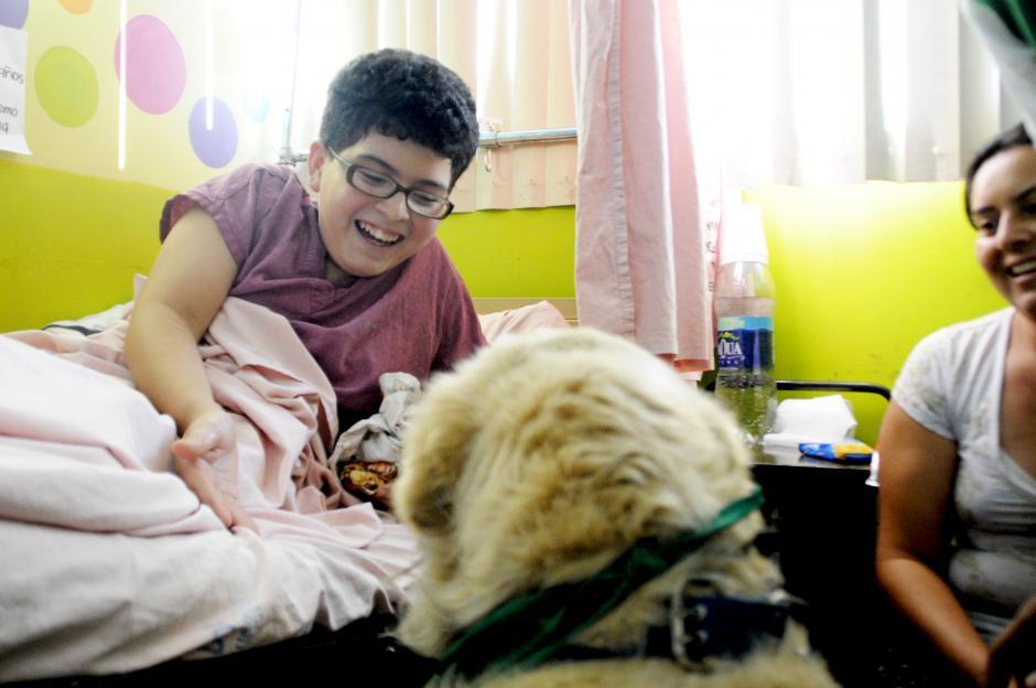 En el San Juan de Dios, tras la visita de las mascotas terapéuticas, los niños y niñas sanan más rápido. (Esteban Biba/Soy502)
