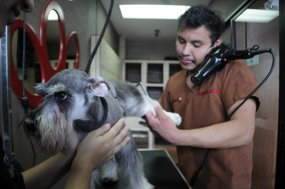 En DogsSmart el personal está capacitado para el cuidado de toda raza de canes.(Foto: Esteban Biba/Soy502)