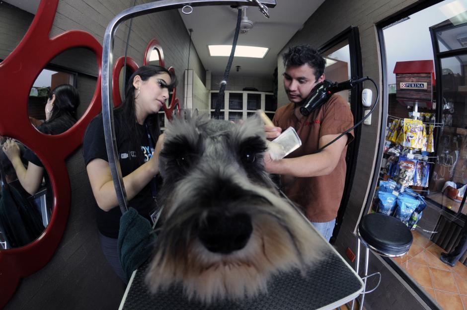 La reportera multimedia de Soy502, Gaby Girón, realizó un grooming a la cachorraBeba. (Foto: Esteban Biba/Soy502)