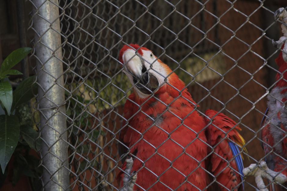 Otras especies se mantienen en Arcas para la reproducción de las mismas.(Foto: Fredy Hernández/Soy502)