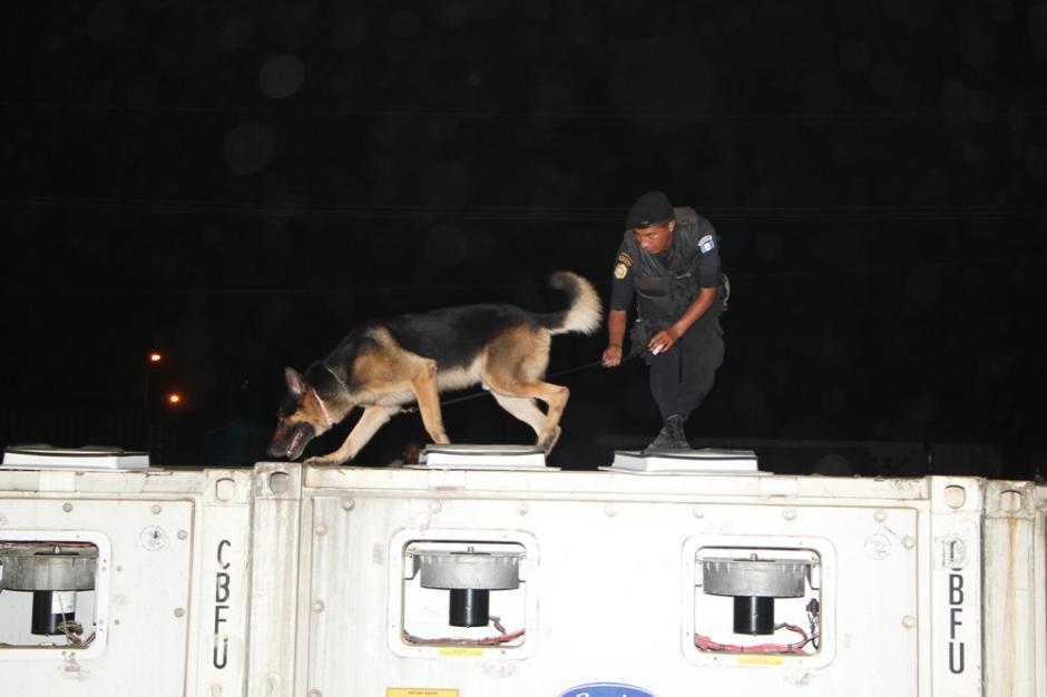 Unidades caninas rastrearon los contenedores donde se localizó el alijo. Foto:PNC