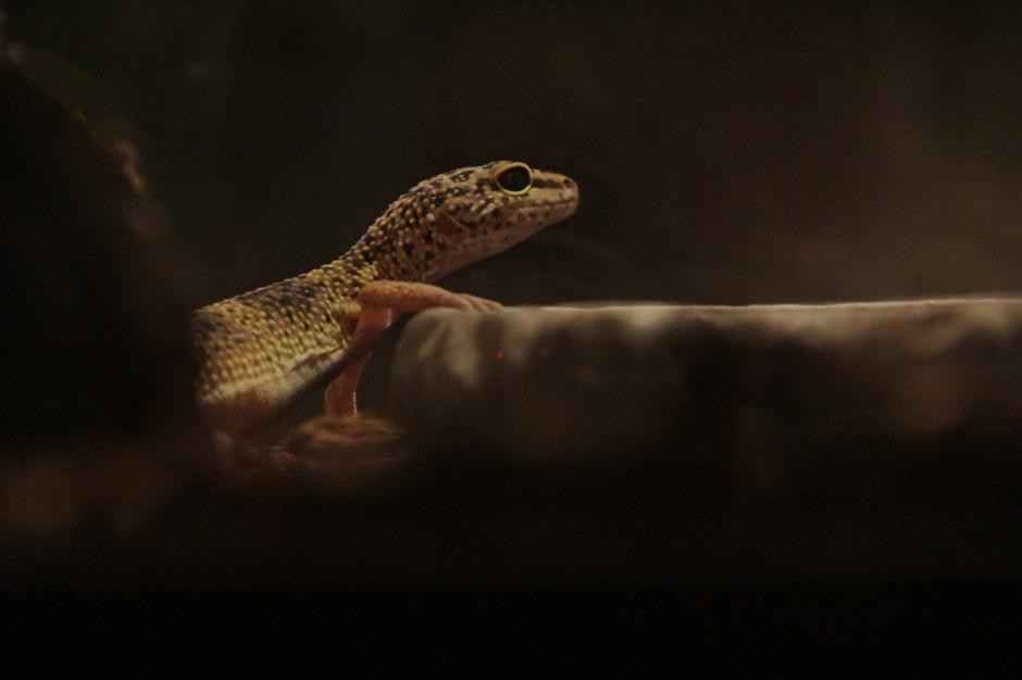 Los reptiles parecen estar acostumbrados a la visita de los humanos. (Foto: Fredy Hernández/Soy502)