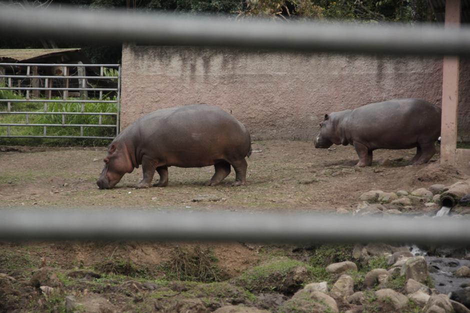 También cuenta con un zoológico, área de recreación y de descanso a las orillas del río. (Foto: Fredy Hernández/Soy502)