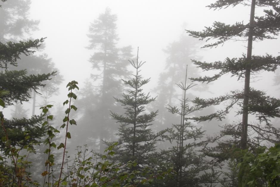 El Parque Regional de Todos Santos Cuchumatán resguarda una gran cantidad de pinabetes que han crecido de forma natural. (Foto: Fredy Hernández/Soy502)