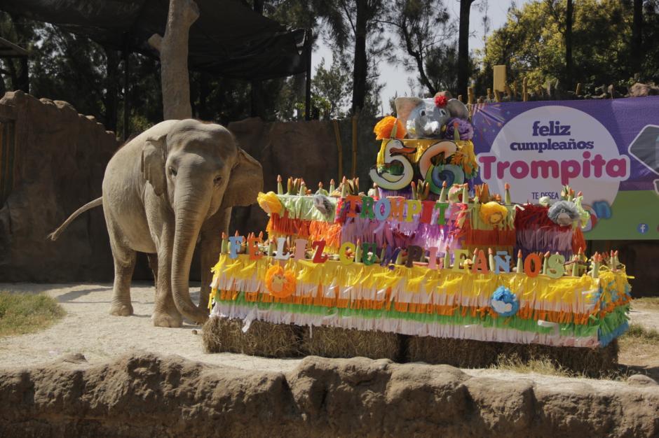 Trompita fue sorprendida con un enorme pastel de frutas. (Foto: Fredy Hernández/Soy502)
