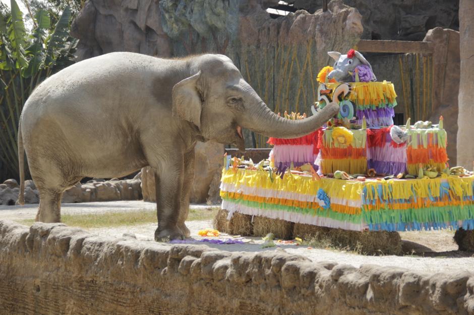 Trompita tiene 56 años, anteriormente vivió en un circo hasta 2008. (Foto: Fredy Hernández/Soy502)
