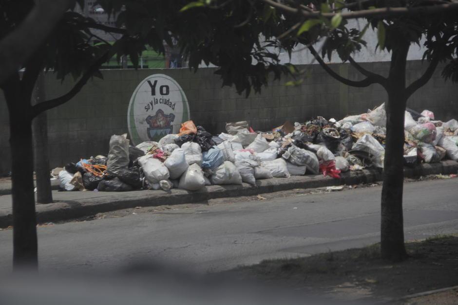 La acumulación de basura atrae a perros callejeros que dejarían por todos lados desechos orgánicos. (Foto: Fredy Hernández/Soy502)