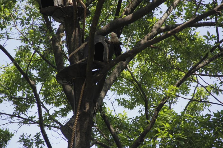 En septiembre se dará a conocer otro de los proyectos que el zoológico ha preparado. (Foto: Fredy Hernández/soy502)
