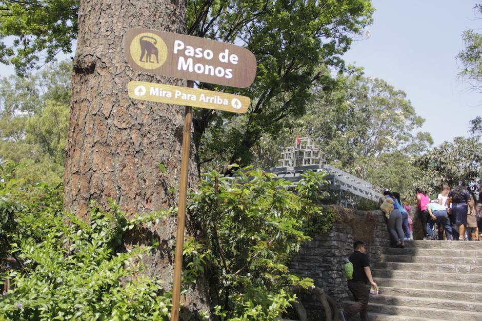 El zoológico La Aurora trata de modificar los espacios para los animales. (Foto: Fredy Hernández/soy502)