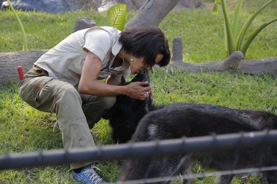 María de Lourdes les da instrucciones a los lobos mientras son observados en su recinto.(Foto: Fredy Hernández/Soy502)