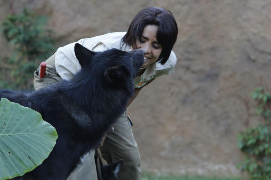 La instructora juega con Hansel, el lobo macho y el que tiene mayor tamaño.(Foto: Fredy Hernández/Soy502)