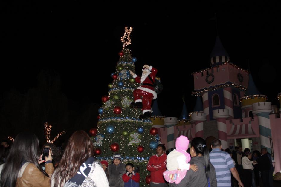 Los árboles de navidad son los más buscados para tomarse fotos. (Foto: Fredy Hernández/Soy502)