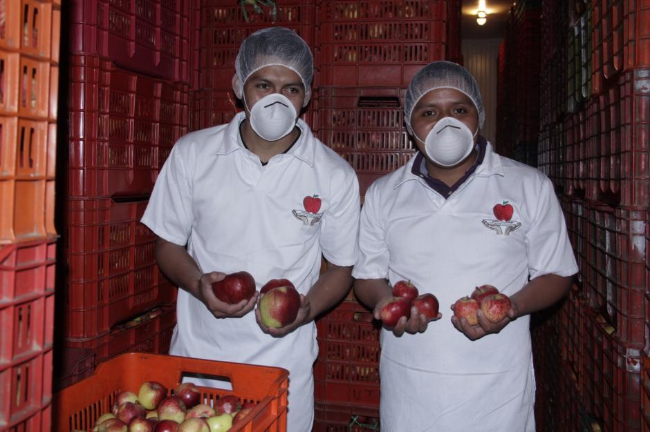 Los cuartos fríos conservan la manzana hasta por tres meses. (Foto: Fredy Hernández/Soy502)