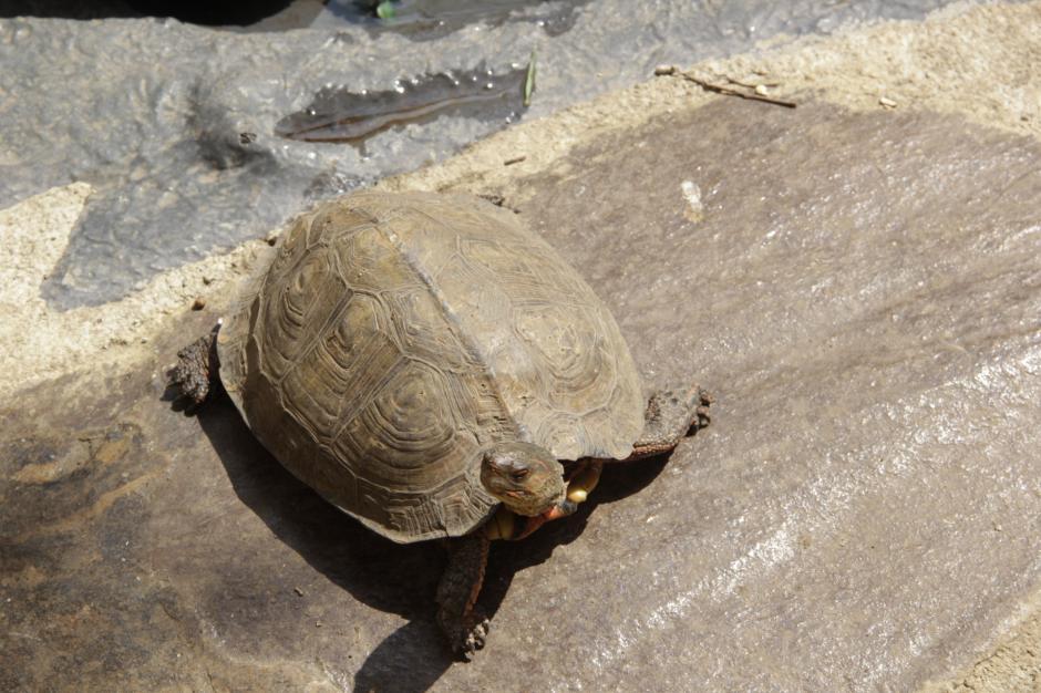 Si tienes uno de estos animales en casa, podrás conocer la mejor manera de criarlos. (Foto: Fredy Hernández/Soy502)