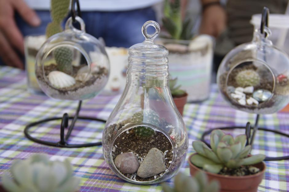 Muchos estudiantes y visitantes llevaron los mini garden para decorar sus hogares o escritorios. (Foto: Fredy Hernández/Soy502)