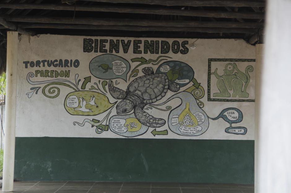 El Conap es el encargado de salvaguardar la vida de un gran número de huevos de tortugas marinas que llegan a las playas de Sipacate. (Foto: Fredy Hernández/Soy502)