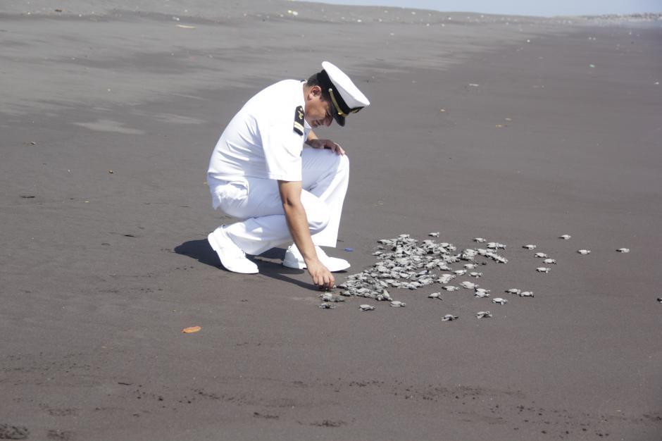 Las tortugas son dejadas en libertan a la orilla de la playa. Pocas llegan a la edad adulta debido a los depredadores naturales y la pesca.(Foto: Fredy Hernández/Soy502)