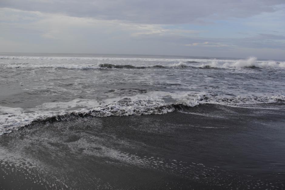 A mar abierto, las amenazas son peces, aves, las redes de los pescadores y las bolsas de plástico que las tortugas confunden con medusas, parte de su base alimenticia. (Foto: Fredy Hernández/Soy502)