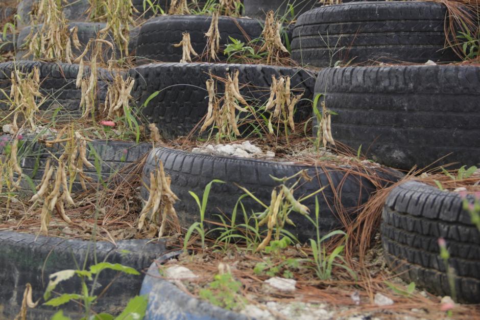 Los espacios han servido para cultivar granos como el frijol. (Foto: Fredy Hernández/Soy502)