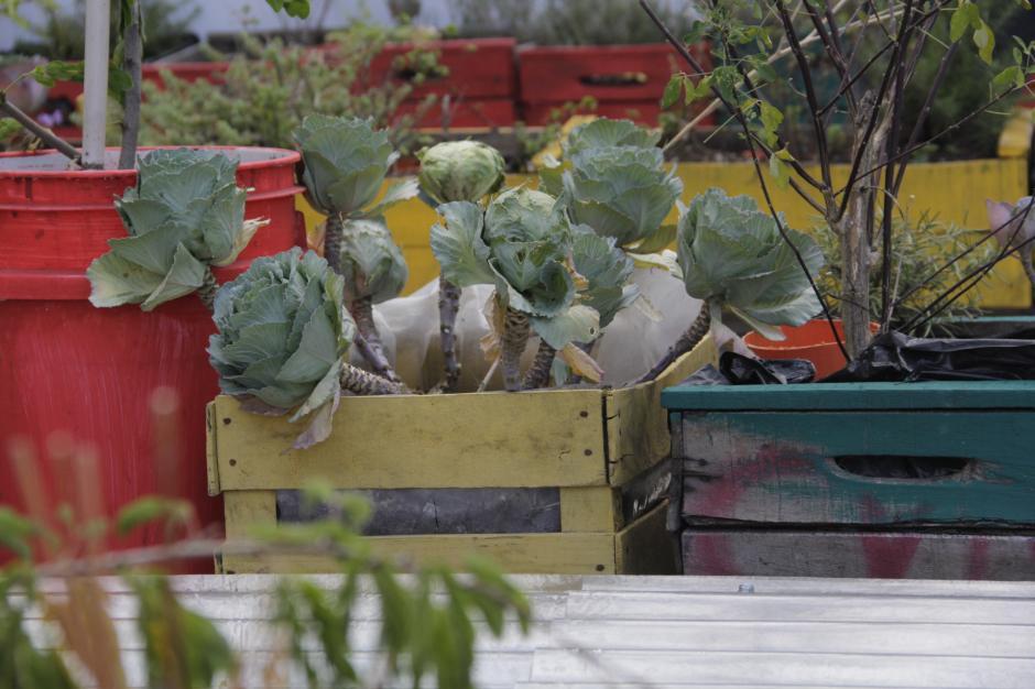 El espacio en la terraza puede ser utilizado para cultivar un huerto. (Foto: Fredy Hernández/Soy502)