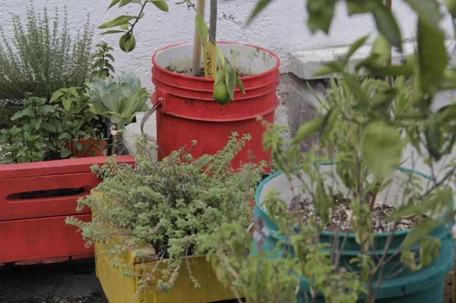 El huerto ya ha dado cosecha de tomates desde el año pasado, así como coliflor, haciendo sentir satisfechos a sus cuidadores. (Foto: Fredy Hernández/Soy502)