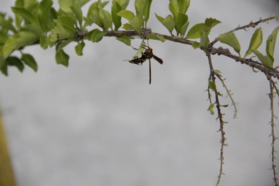Otro de los cambios en el ambiente de la Casa Municipal es la aparición de insectos que antes no había en el lugar y se alimentan de las plantas. (Foto: Fredy Hernández/Soy502)