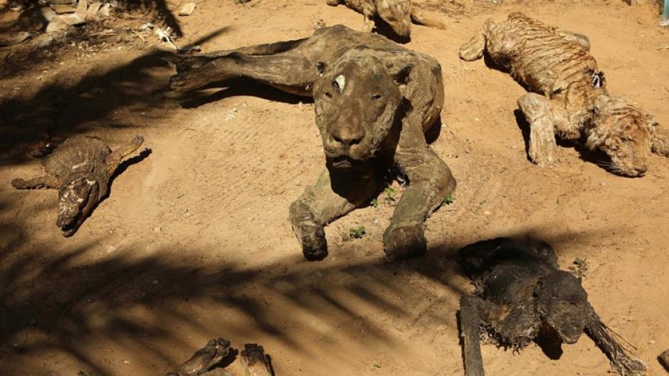 Varios animales forman la ahora colección exhibida en el zoológico. (Foto: infobae)