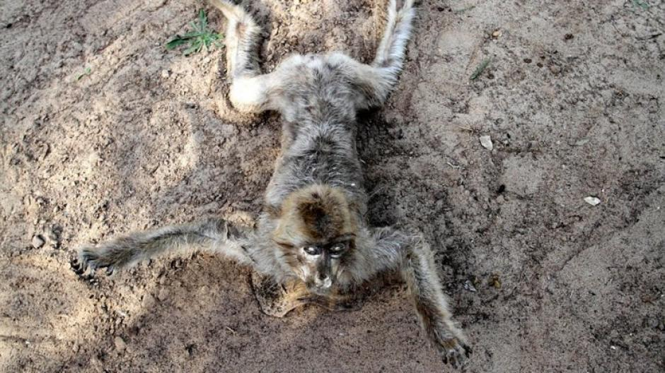 Las horribles imágenes de decenas de cadáveres pertenecen al zoo de Khan Younis, en el sur de la Franja de Gaza. (Foto: infobae)