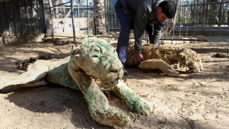 Las víctimas se quedaron sin alimento ni agua debido al conflicto entre Palestina e Israel. (Foto: infobae)