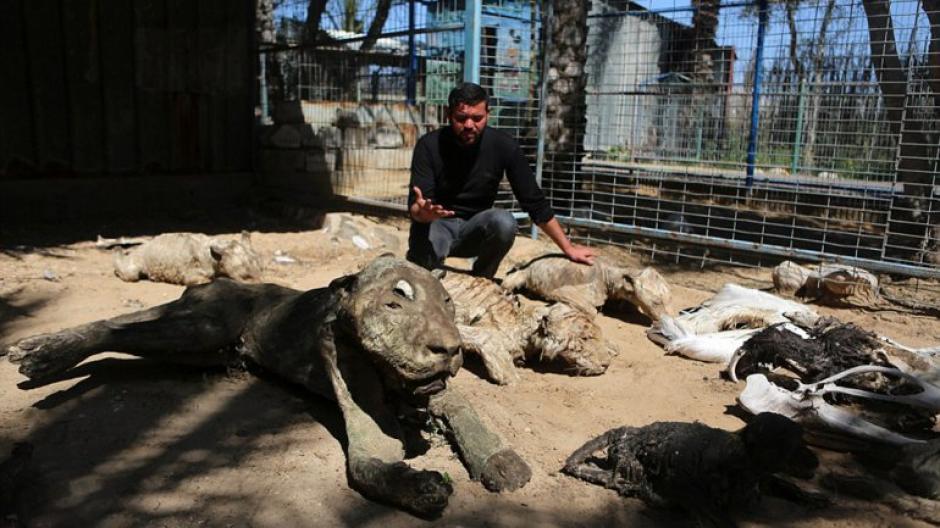 Los animales fallecieron a causa del abandono y hambre, a causa de ataques contra grupos terroristas. (Foto: infobae)