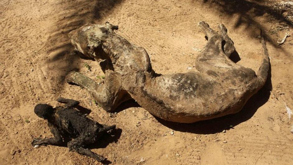 Los animales ahora se encuentran allí como adornos o gnomos, secos y completamente sin vida. (Foto: infobae)