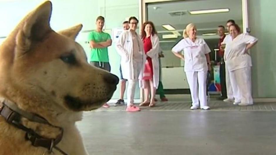 La mascota ha llamado la atención de las enfermeras y médicos del hospital. (Foto: abc.es)