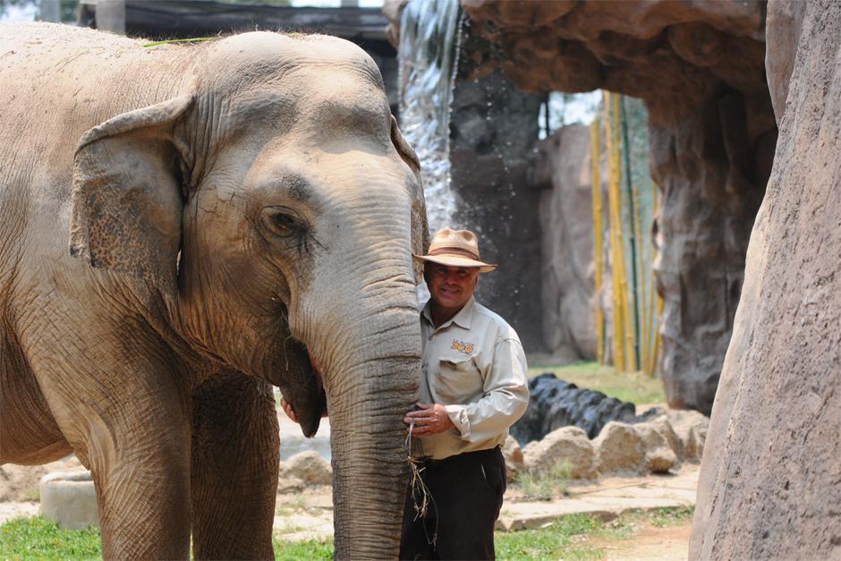 """Romeo López """"Tarzan"""" al lado de Bombi """"Trompita"""" la elefante del zoológico La Aurora. (Foto: Alejandro Balán /Soy502)"""
