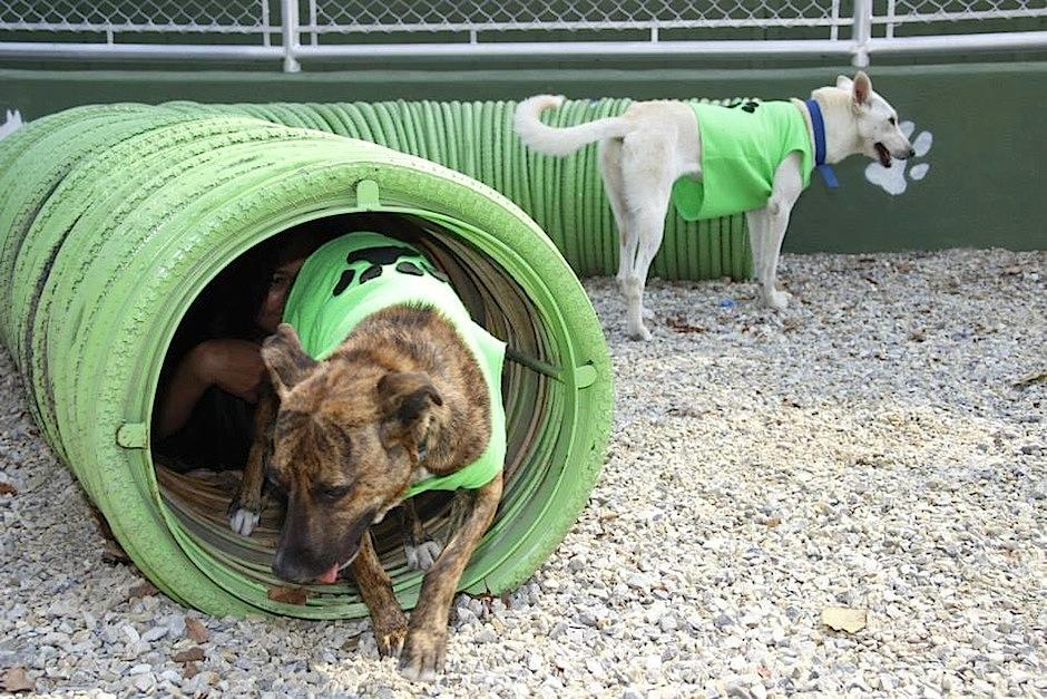 Soy502 visitó a los inquilinos del Albergue Municipal de Mascotas. (Foto: Albergue Municipal de Mascotas)