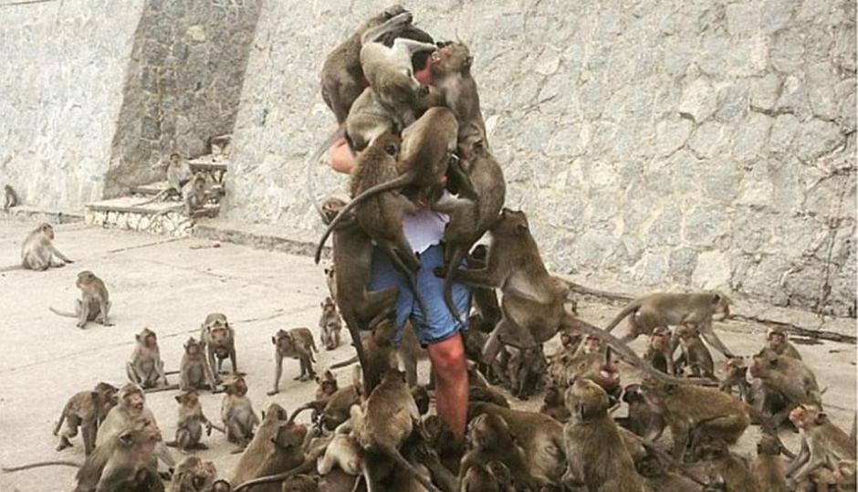 Un hombre es rodeado por varios monos que quieren comida. (Foto: Perú.com)