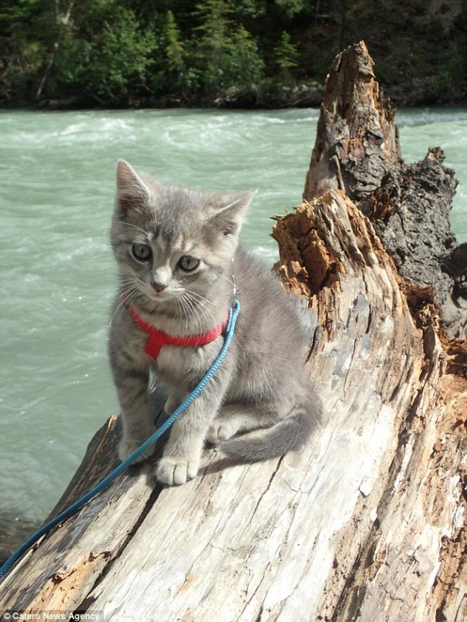 Koda cruza el río y escala árboles. (Foto: Instagram)