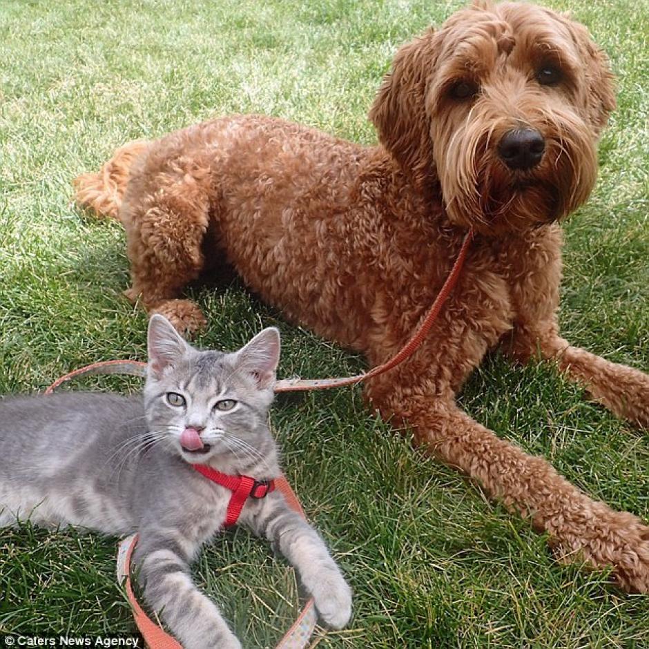 Koda es un gatito rescatado de una casa con sobrepoblación felina. (Foto: Instagram)
