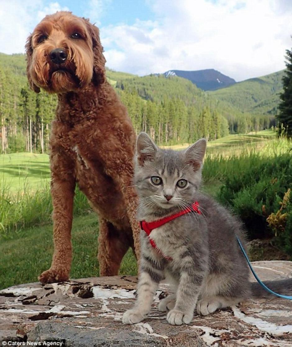 Las mascotas son mejores amigos. (Foto: Instagram)