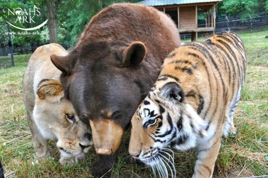 Esta inusual amistad está dando de que hablar. (Foto: Noah's Ark Animal Sanctuary)