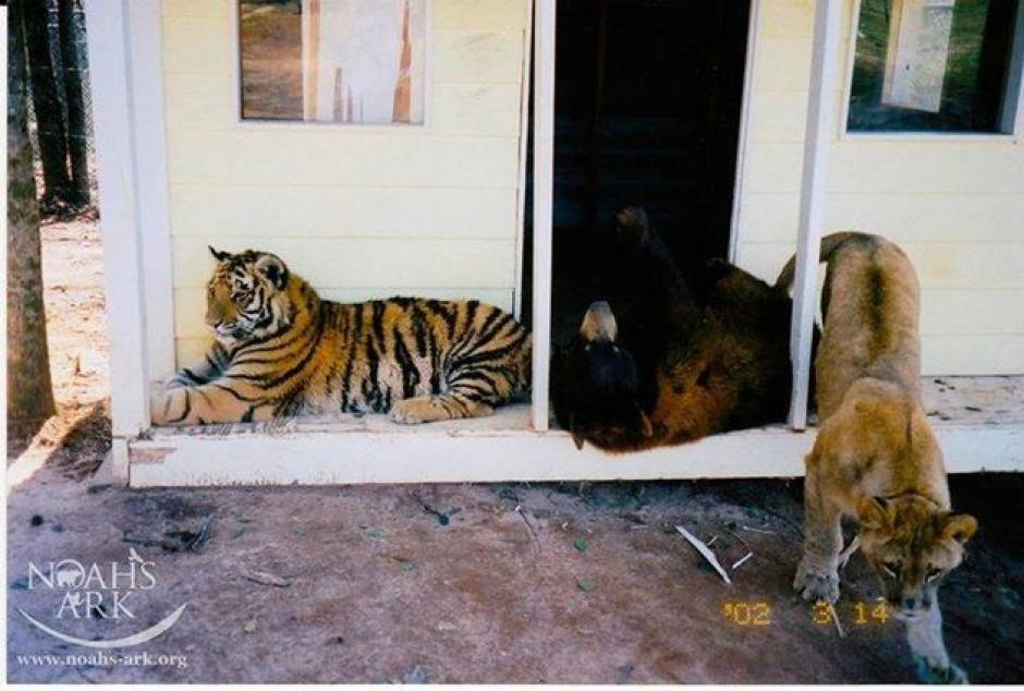 Los animales estaban desnutridos y enfermos. (Foto: Noah's Ark Animal Sanctuary)