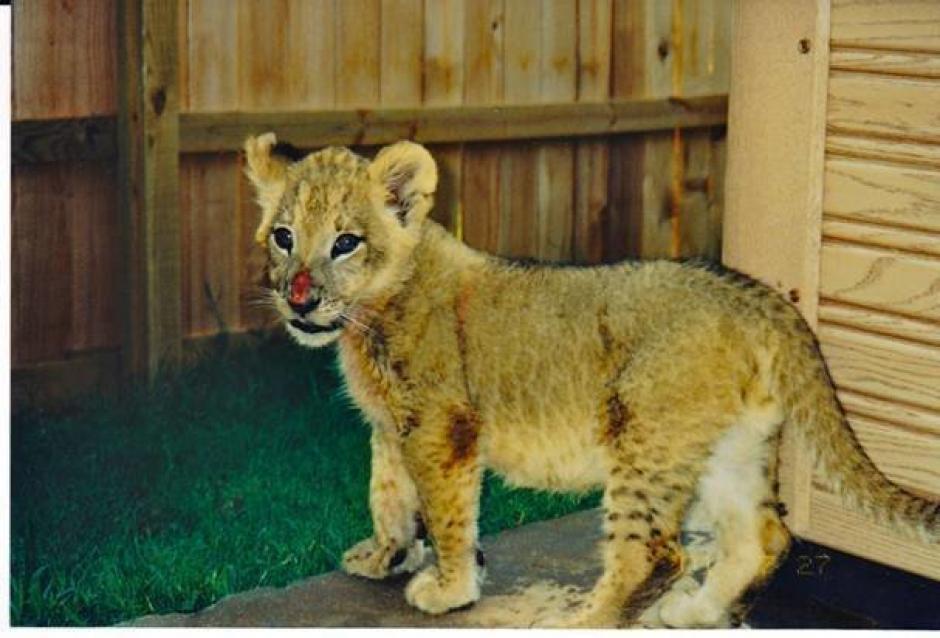 Fueron encontrados con heridas graves en su cuerpo. (Foto: Noah's Ark Animal Sanctuary)
