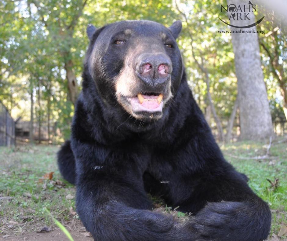 Baloo es muy dulce. (Foto: Noah's Ark Animal Sanctuary)