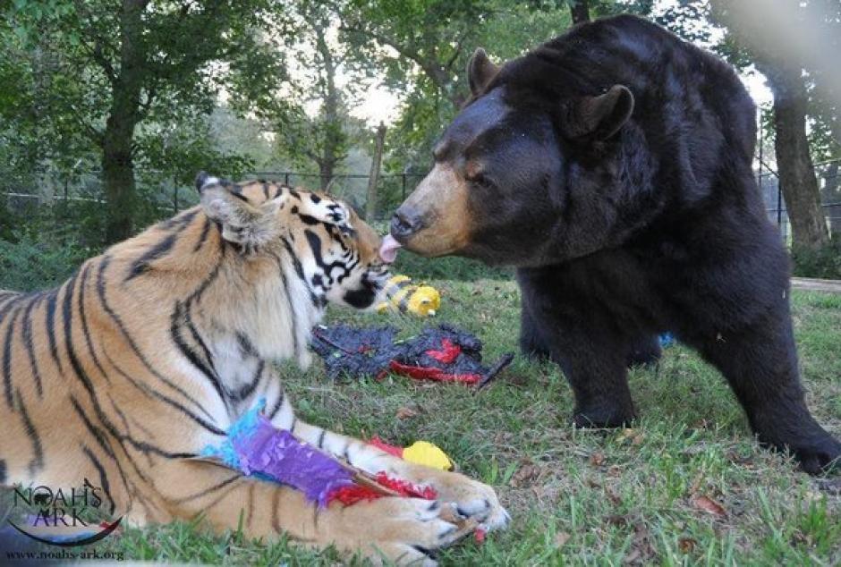 Los animales tienen un duro pasado. (Foto: Noah's Ark Animal Sanctuary)