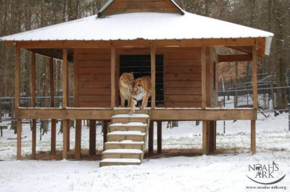 Eran cachorros y estaban en deplorables condiciones. (Foto: Noah's Ark Animal Sanctuary)
