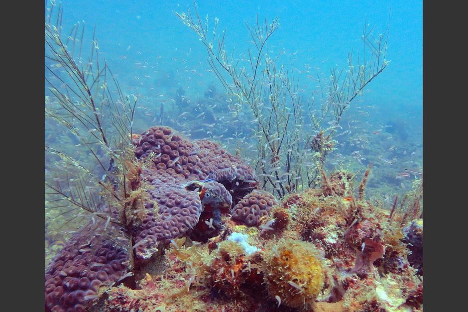 Los arrecifes absorben la energía de las olas, lo cual protege a las zonas costeras. (Foto: Ana Giró)